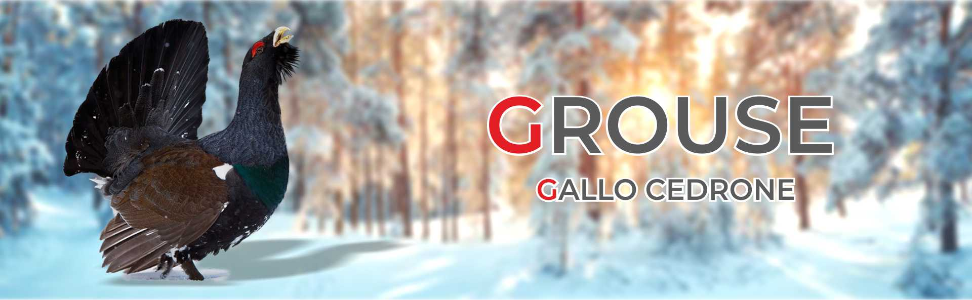Grouse Creek, calzature e abbigliamento per l'outdoor banner1920