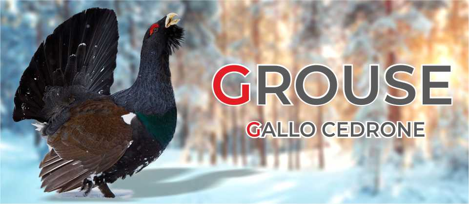 Grouse Creek, calzature e abbigliamento per l'outdoor banner960